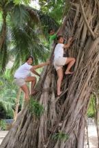 Climbing up the balete tree