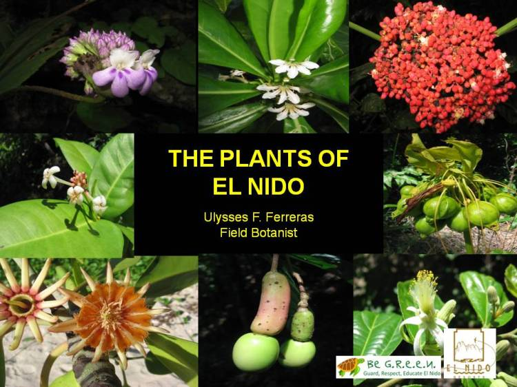 Ferreras 2011 - The Plants of El Nido cover