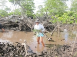 Groovin' with the mangroves!