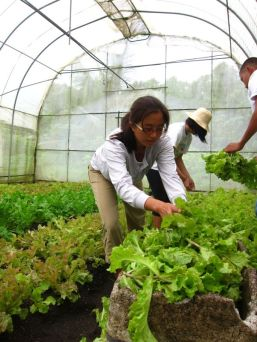 And harvesting the lettuce!
