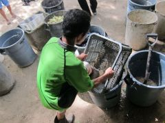 Kuya Tolits squeezes the water out of the food waste