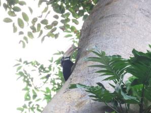 Parent guarding the nest.