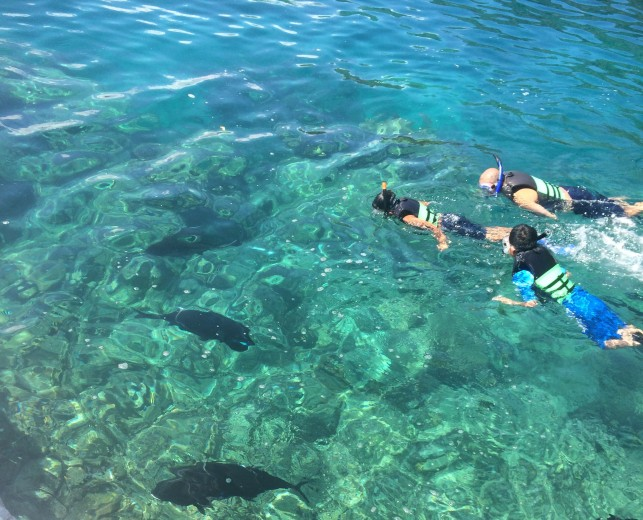 Guest snorkeling with our big friends