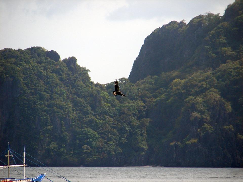 Jefferyi Eagle – El Nido Resorts Environment and Sustainability